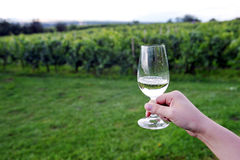 Glass of wine in vineyard Stock Photo