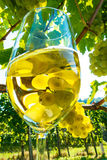 Glass of wine in the vineyard Stock Image
