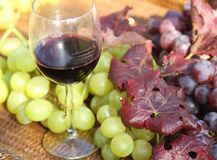 Glass of wine with white grapes and great bunch of black grapes Royalty Free Stock Images