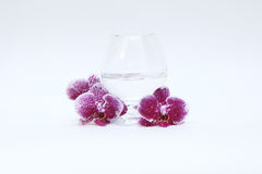 Glass wineglass and orchid Stock Photo