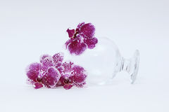 Glass wineglass and orchid Royalty Free Stock Photos