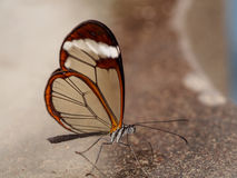 Glass wing on mamer stock photography
