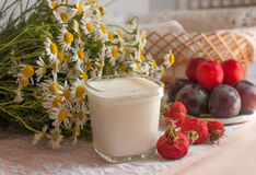 A glass of yogurt, a bouquet of chamomiles and a plate of ripe plums on a light lace surface decorated with hips Stock Images