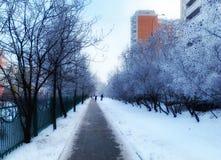 Glassa di mattina dopo il congelamento pesante alla notte fotografia stock