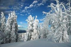Glassare di inverno Fotografia Stock