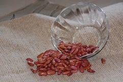 Glasschüssel verschüttete rote Gartenbohnen Stockfotos