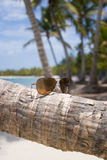 Glasses. Sun glasse on the palm trees on Bavaro beach, Dominican republic Royalty Free Stock Image