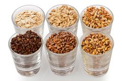 Glasses with Assorted Beer Grains royalty free stock photos