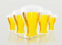 Glasses of beer and Barley Stock Photo