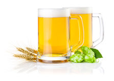 Glasses of beer with Green hops and ears of barley Royalty Free Stock Photos