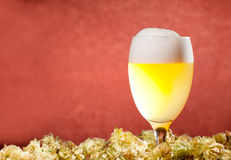 Glasses of beer with hop Stock Image