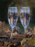 Glasses of champagne in oak leaves Royalty Free Stock Photo