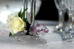 Glasses with creamy white rose royalty free stock photo