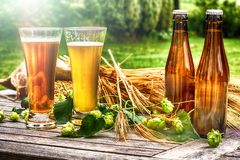 Glasses with fresh cold beer in rustic setting stock photography