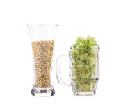 Glasses of fresh green hops and barley Royalty Free Stock Photography
