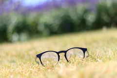 Glasses in the grass stock photos