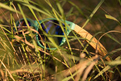 Glasses in the grass. Wooden glesses beautiful and fashion, natural trend stock photo