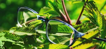 Glasses hung on a plant. Beautiful optometry glasses in green grass and violet flowers. Conceptual photo for poor vision or myopia. Glasses hanging on a plant royalty free stock photography