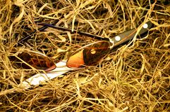 Glasses and knife on dry grass. Brown Glasses and knife on dry grass, murder concept, crime scene concept, homicide scene, objects forgotten on dry grass royalty free stock photography