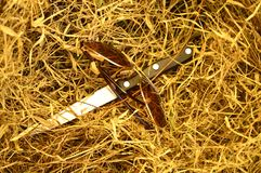 Glasses and knife on dry grass. Brown Glasses and knife on dry grass, murder concept, crime scene concept, homicide scene, objects forgotten on dry grass stock photography