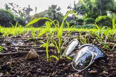 Glasses on the lawn. Growing Green lawn grass outside on a sunny day with glasses and pebbles Royalty Free Stock Photos