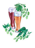 Glasses with light and dark beer. Branch green hops. Watercolor illustration on white background. Stock Photo