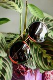 Glasses in a metallic red-green frame on the leaves of the plant stock image