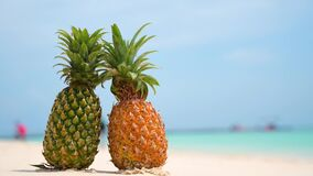 Glasses pineapples are located on the beach by the sea in the hot sun, setting the concept for summer. Glasses pineapples are  located on the beach by the sea in stock video