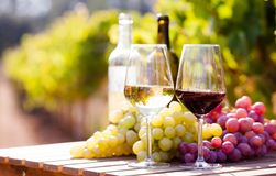 Glasses of red and white wine and ripe grapes on table in vineyard stock photo