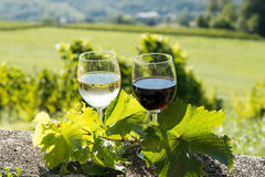 Glasses of red and white wine. With a vineyard in the background stock images