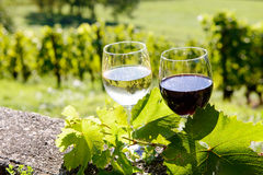 Glasses of red and white wine Royalty Free Stock Photography
