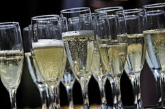 Glasses of sparkling champagne on a tray closeup Royalty Free Stock Photo