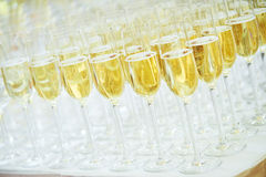 Glasses with sparkling wine in row. Catering services. rows of glasses with sparkling wine at restaurant party or celebration stock photos