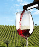 Glasses of wine Royalty Free Stock Images