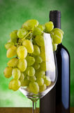 Glasses of wine and grapes Stock Photography