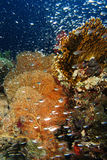Glassfish zwemt voor gorgonia stock foto's