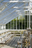 Glasshouse. In sunny day inside Royalty Free Stock Images