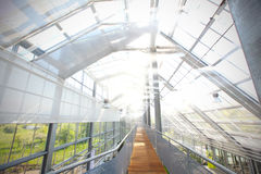 Glasshouse with active sprinklers Royalty Free Stock Photos