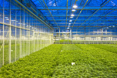 Glasshouse climate control Royalty Free Stock Image