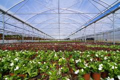 Glasshouse with flowers Stock Photography