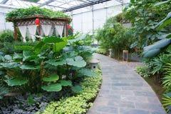 Glasshouse garden Royalty Free Stock Photo