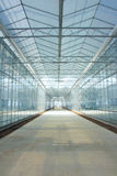Glasshouse. The inner view of glasshouse Royalty Free Stock Photos