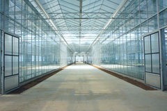 Glasshouse. The inner view of glasshouse Stock Photos