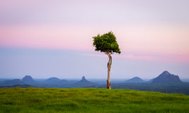 Glasshouse Mountains Stock Photography