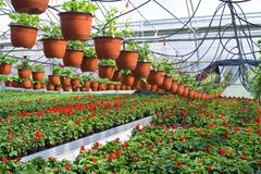 Glasshouse with plants Stock Photos