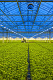 Glasshouse transportation Stock Photography