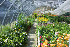 Glasshouse With Flowers Stock Photos