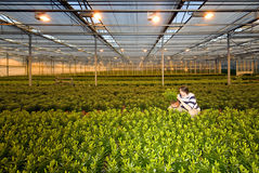Glasshouse worker Stock Images