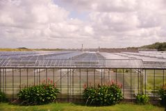 Glasshouses Royalty Free Stock Image