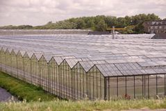 Glasshouses Stock Images